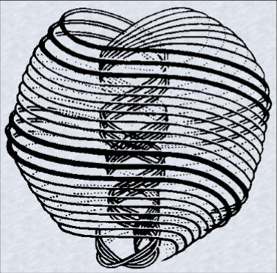 The doublespiral structure of the Creation