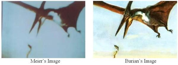 Both-pteranodon-pictures-side-by-side.jpg