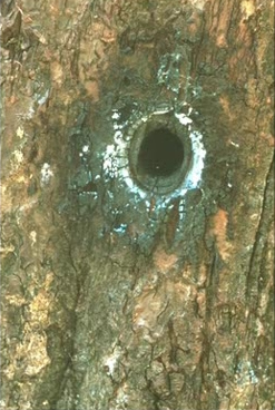 File:Tree that billy shot4.jpg